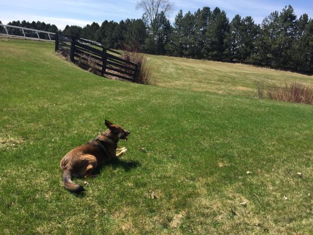 Sarah Boston's Dog